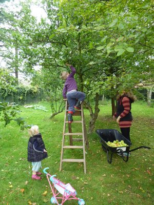 Harvesting cider apples from our orchard  @ www.jamesandtracy.co.uk